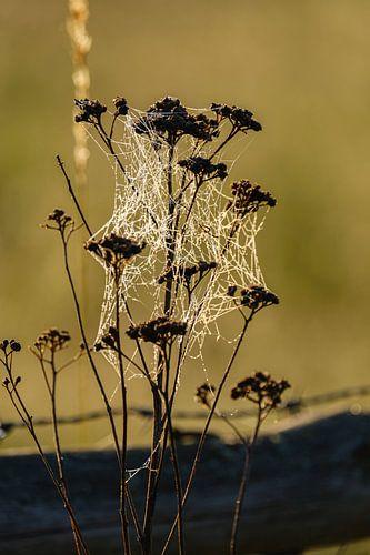 Spinnenweb in het ochtendzonnetje