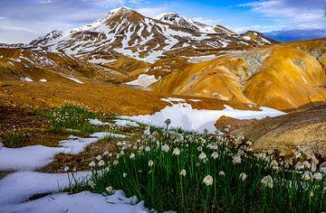 Bunte Berge in Kerlingarfjöll Island mit Schneeglöckchen im Vordergrund von Kevin Pluk