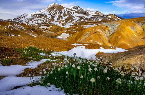 Kleurrijke bergen in Kerlingarfjöll  Ijsland met sneeuwklokjes op de voorgrond