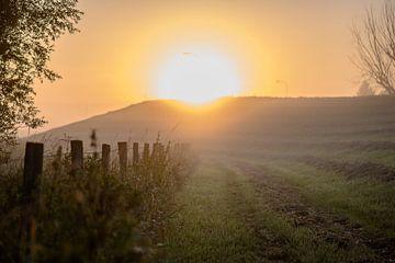 hier kommt die Sonne von Tania Perneel