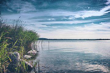 Riet in het midden van het meer - Zwemmen tegen de stroom in van Jakob Baranowski - Off World Jack