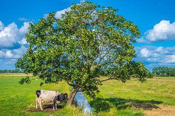 koe onder een boom van Fred Leeflang