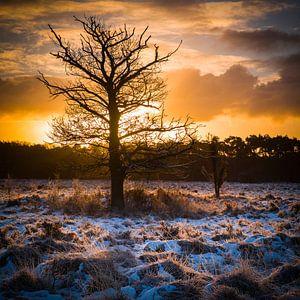Buurserzand boom van
