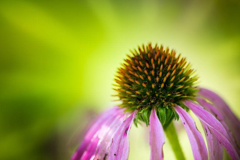 Flower 5 van Deshamer