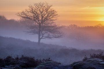 Nebliger Sonnenaufgang Gasterse Duinen von Jurjen Veerman