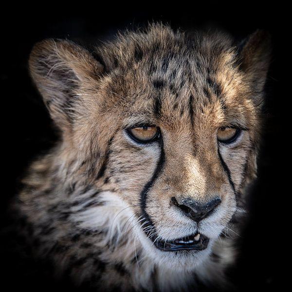 Portret van Cheetah welp in Namibië van Jille Zuidema