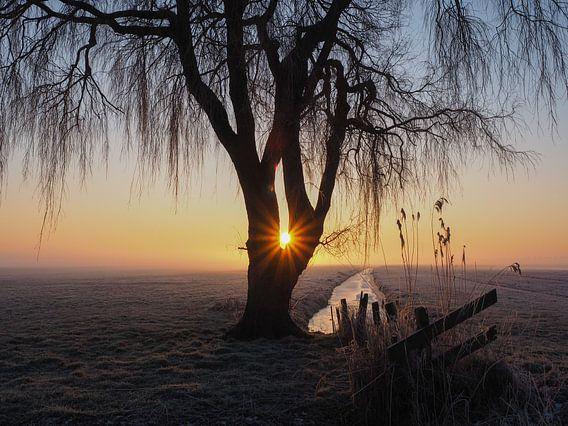 Weeping Willow van Wendy Drent