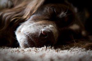 Hondenleventje van
