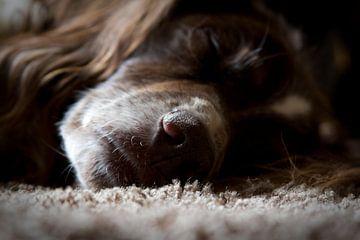 Hondenleventje sur Jasper Hovenga
