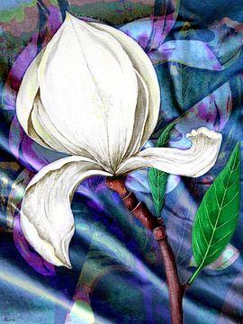 Troisième Magnolia van Gertrud Scheffler