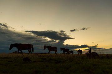 Pferde in der Großen Karoo von Theo van Woerden