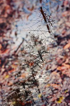 La beauté d'une flaque de pluie sur Anouschka Hendriks