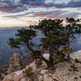Wonderful Grand Canyon Sunset (2) van Hans Brinkel