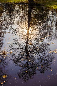 reflectie van herfstboom