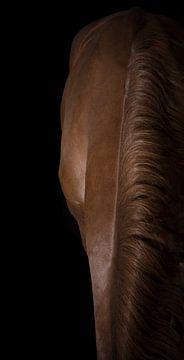 Eleganz des Pferdes von Stephanie Prozee