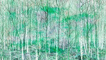 Birkenwald von Bart Uijterlinde
