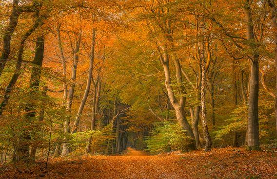 Sprookjes bos van Xander Haenen