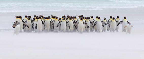 Just a few penguins (nur ein paar Pinguine)