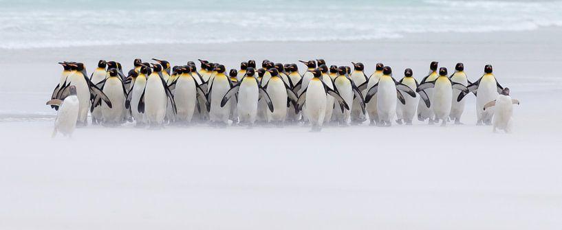 Just a few penguins van Claudia van Zanten