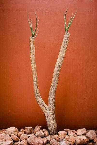 Woestijnplant voor een muur in terracotta kleur van Jille Zuidema