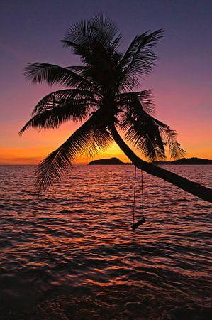 Schommelen onder de palmboom