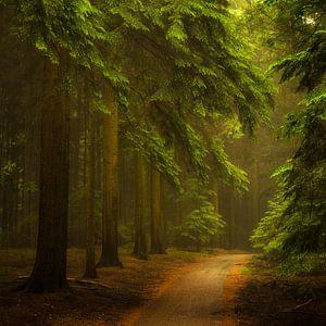 Magisch woud.  Magic Forest. van