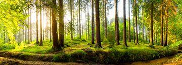 Wald bei Sonnenaufgang von Günter Albers
