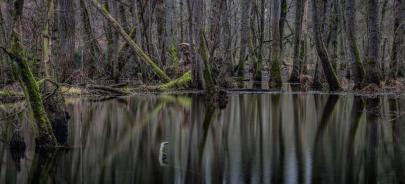 Reflection forest van Davy Sleijster
