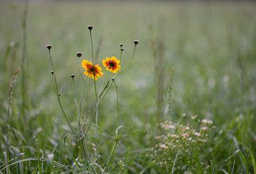 kleur in het gras van Tania Perneel