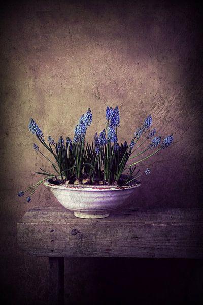 Blaue Trauben im Rampenlicht! von Els Fonteine