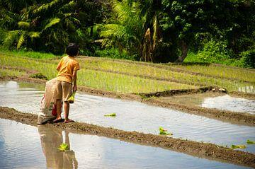 Meisje in rijstveld van Olivier Van Acker