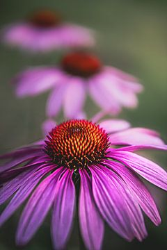 Violette Blumen von Jeroen Luyckx