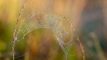 Buntes Spinnennetz von Saskia Pasman