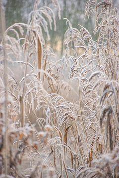 Winterliche Natur in den Niederlanden von Bianca Kramer