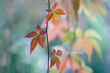 Autumnal kaleidoscope van Maria Ismanah Schulze-Vorberg