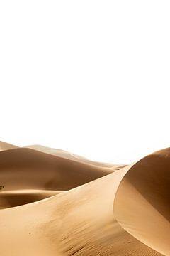 Sahara °12 sur Jesse Barendregt