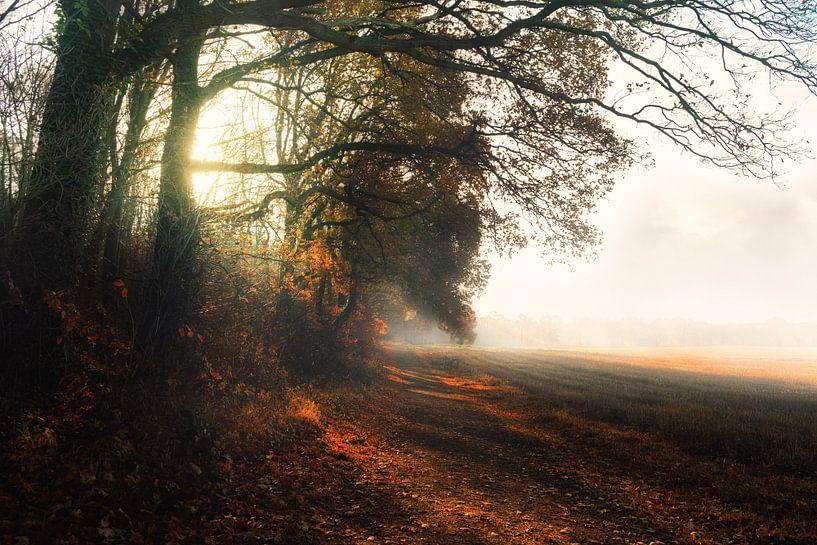 Ein kalter morgen von Arjen Roos