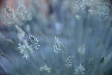 Plant met rustgevende achtergrond