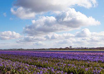 Paarse bloemen van Eelke Cooiman