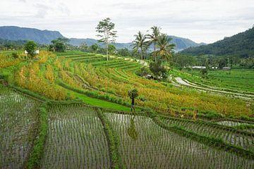 Oost Bali van Martijn Stoppels