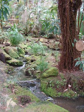 Japans tuintje van David Van der Cruyssen