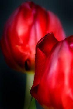 Het stalken van een tulp - een familieportret #20 van Peter Baak