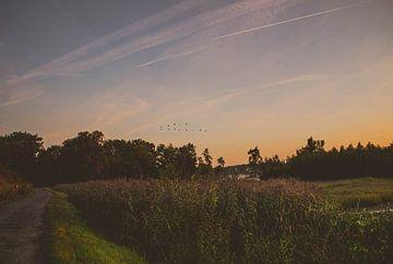 Naturschutzgebiet Bourgoyen-Ossemeersen Gent von Daan Duvillier