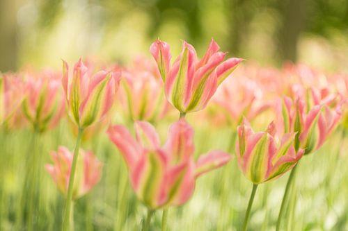 Wapperende bladen deinen mee op de lentebries die voorbijkomt.  van