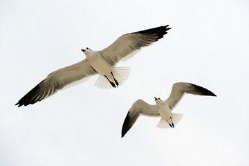 Follow That Gull van