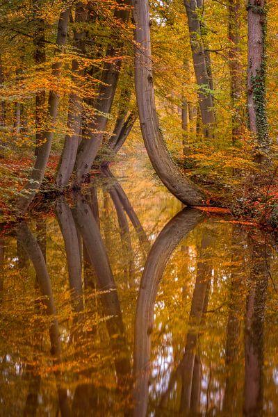 Autumn reflections van Mario Visser