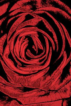 Rose van Micha Papenhuijzen