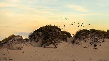 Duinen en vogels van Arthur de Rijke