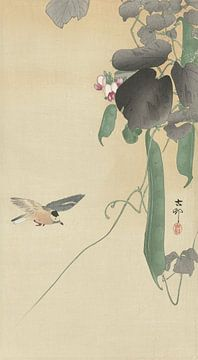 Vogel bij bloeiende bonenplant van Ohara Koson