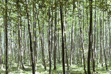 Schöner Wald II von Miranda van Hulst